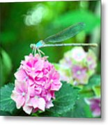 Turquiose Dragonfly  And Hydrangea Metal Print