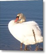 Twisted  White Swan Metal Print