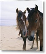 Two Curious Wild Horses On The Beach Metal Print by Nick Caloyianis