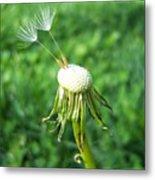 Two Dandelion Seeds Metal Print
