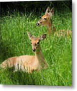 Two Deer In Tall Grass Metal Print