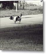 Two Dogs Metal Print by Toni Hopper