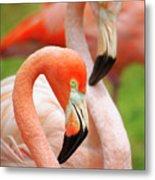 Two Flamingoes Metal Print by Carlos Caetano