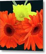 Two Gerbers And Daffodil Metal Print