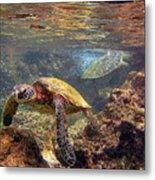 Two Turtles Metal Print by Bette Phelan