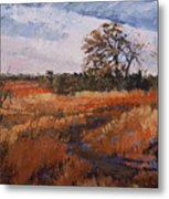 Typical Texas Field Metal Print