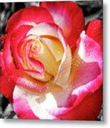 Unity Rose Metal Print