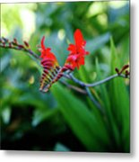 Unusual Flower 1 Metal Print