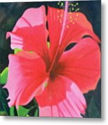 Up Close And Personal Too Metal Print