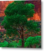 Utah - Cottonwood Metal Print