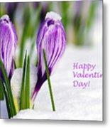 Valentines Day Crocuses Metal Print