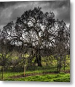 Valley Oak Metal Print