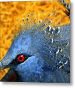 Victoria Crowned Pigeon Close Up Metal Print