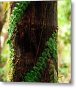 Vining Fern On Sierra Palm Tree Metal Print