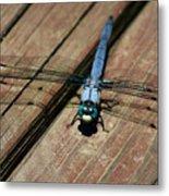 Violet Dancer On A Great Blue Skimmer Metal Print