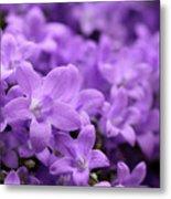 Violet Dream V Metal Print