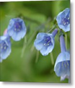Virginia Bluebells I Metal Print