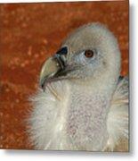 Vulture Portrait Metal Print
