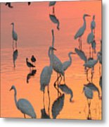 Wading Birds Forage In Colorful Sunset Metal Print