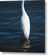 Wading Reflections Metal Print