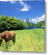 Wainiha Valley Metal Print by Peter French - Printscapes