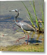 Walking On The Edge Metal Print