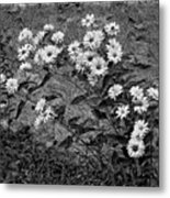 Wallflower Ain't So Bad Bw Metal Print