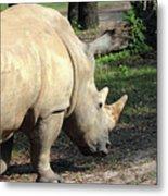 Wandering Rhino Metal Print