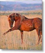 War Horse Metal Print by Sandy Sisti