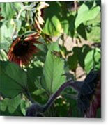 Wasp And Sunflowers Metal Print