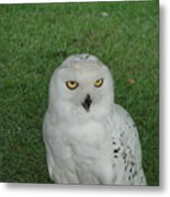 Watching Owl Metal Print