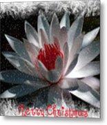 Water Lily Christmas Metal Print