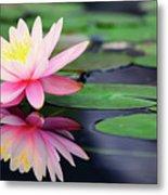 Water Lily In Lake Metal Print