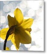 Water Reflected Daffodil Metal Print
