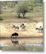 Watering Hole Metal Print