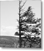 Weathered Tree Metal Print