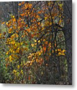Web Of Color Metal Print