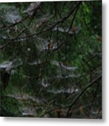 Webs Of A Tree Metal Print