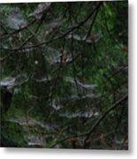 Webs Of A Tree Metal Print