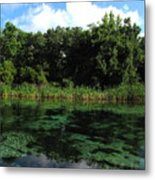 Weeki Wachee River Metal Print