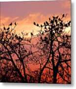 Wente Road Sunset Metal Print