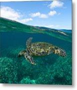 West Maui Green Sea Turtle Metal Print