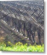 Wet Vineyard Metal Print