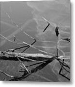 Wet Wood Metal Print