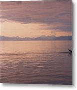 Whale Tail At Surface Metal Print