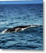 Whale Watching Balenottera Comune 3 Metal Print