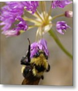 What's The Buzz Metal Print