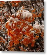 When Fall Meets Winter Metal Print