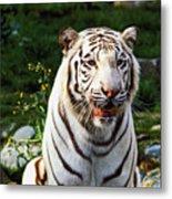 White Bengal Tiger  Metal Print by Garry Gay