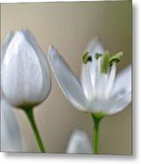 White Blossom 1 Metal Print